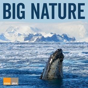 ZONE 599 Big Nature
